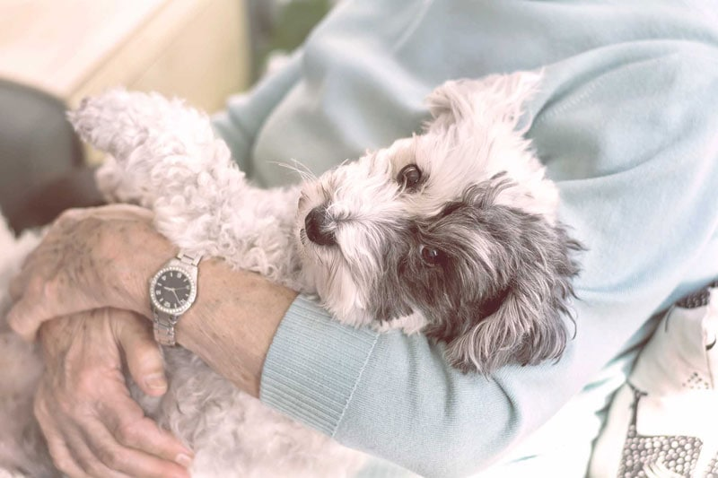 A photo of a senior woman hugging her poodle dog.